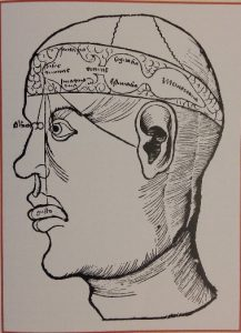 Gehirnstruktur